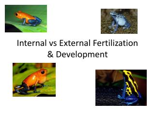 Internal vs External Fertilization & Development