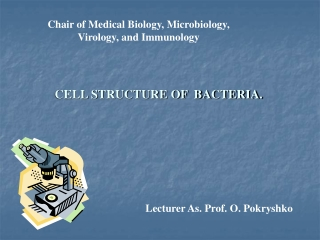 Chair of Medical Biology, Microbiology, Virology, and Immunology