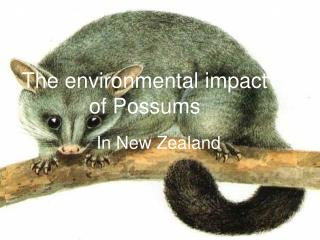 The environmental impact of Possums