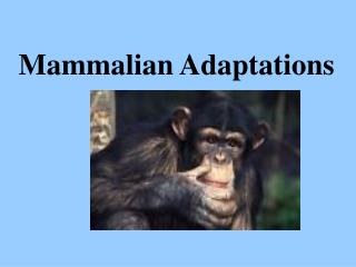 Mammalian Adaptations