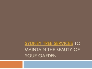 Sydney tree srvices to maintain your garden's beauty