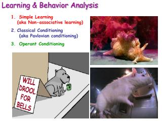 Learning & Behavior Analysis