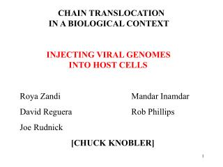 CHAIN TRANSLOCATION 			      IN A BIOLOGICAL CONTEXT INJECTING VIRAL GENOMES 			     INTO HOST CELLS    Roya Zandi