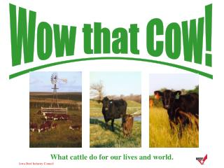 Wow that Cow!