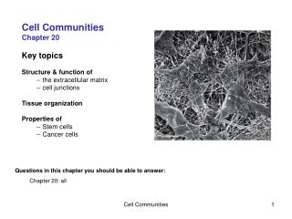 Cell Communities Chapter 20 Key topics Structure & function of 	-- the extracellular matrix 	-- cell junctions Tissu
