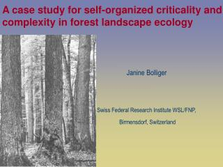 A case study for self-organized criticality and complexity in forest landscape ecology