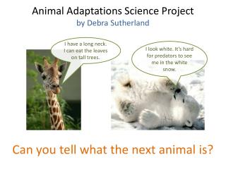 Animal Adaptations Science Project by Debra Sutherland