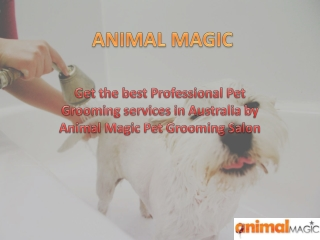 Dog Grooming Brisbane