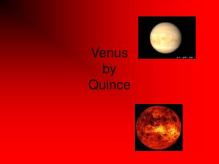 Venus by Quince