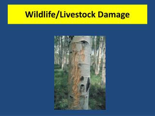 Wildlife/Livestock Damage