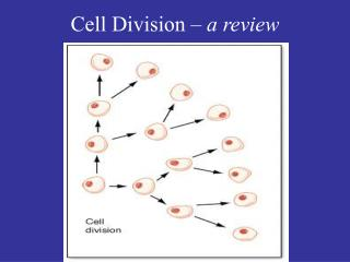 Cell Division  – a review