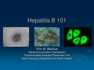 Hepatitis B 101