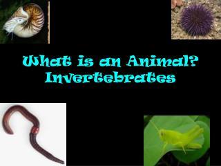What is an Animal? Invertebrates