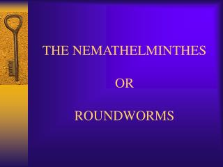 THE NEMATHELMINTHES OR ROUNDWORMS