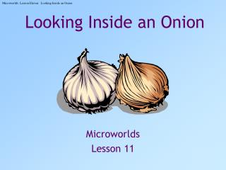 Looking Inside an Onion