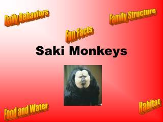 Saki Monkeys