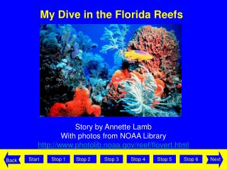 My Dive in the Florida Reefs