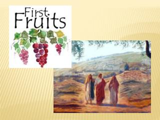 First-fruits a taste of tomorrow First-fruits   our hope when there s sorrow Jesus rose up from the dead To show His peo