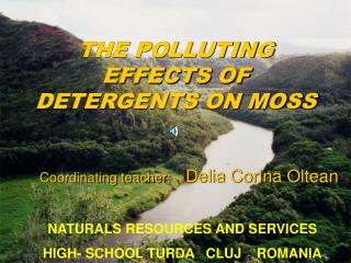 THE POLLUTING EFFECTS OF DETERGENTS ON MOSS