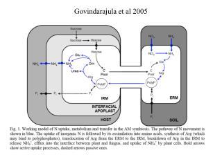 Govindarajula et al 2005