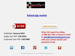 Poland pigs market