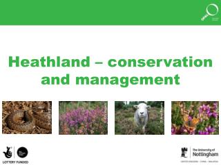 Heathland – conservation and management