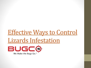 Effective Ways to Control Lizards Infestation