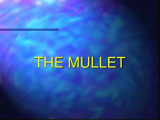 THE MULLET