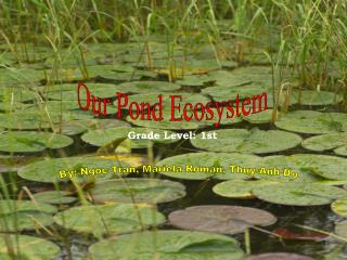 Our Pond Ecosystem