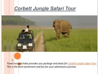 Adventures jungle safari tour in india