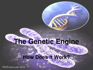 The Genetic Engine How Does it Work?