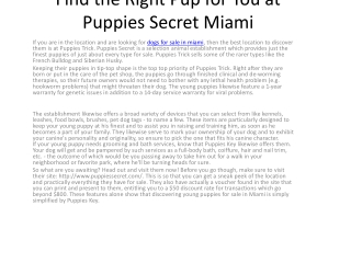 Find the Right Puppy for You at Puppies