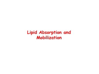 lipid absorption