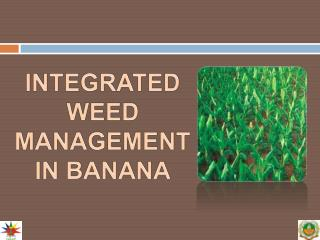 INTEGRATED WEED MANAGEMENT IN BANANA