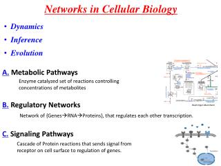 Networks in Cellular Biology