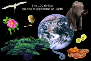 5 to 100 million  species of organisms on Earth