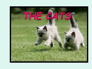THE CATS