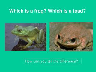 Which is a frog? Which is a toad?