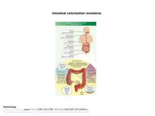 Intestinal colonization resistance