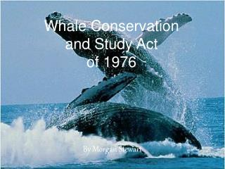Whale Conservation and Study Act of 1976