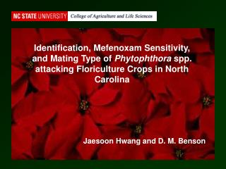 Identification, Mefenoxam Sensitivity, and Mating Type of  Phytophthora  spp. attacking Floriculture Crops in North Caro