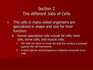 Section 2  The different Jobs of Cells