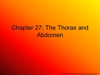 Chapter 27: The Thorax and Abdomen