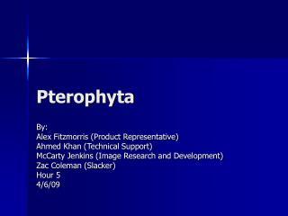 Pterophyta