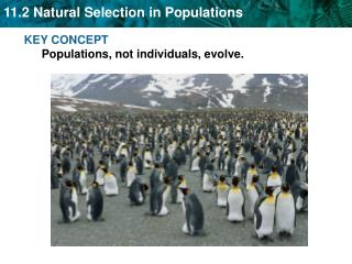 KEY CONCEPT  Populations, not individuals, evolve.