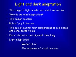 Light and dark adaptation