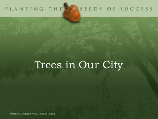Trees in Our City