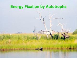 Energy Fixation by Autotrophs