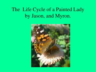 The Life Cycle of a Painted Lady by Jason, and Myron.