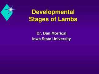 developmental  stages of lambs